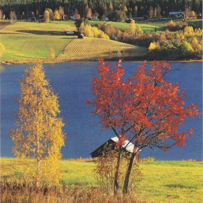 Foto: Sven Halling/Naturbild.  Svenska Naturkort Ocirkulerat Ägare: Linda Öhrman 10x15