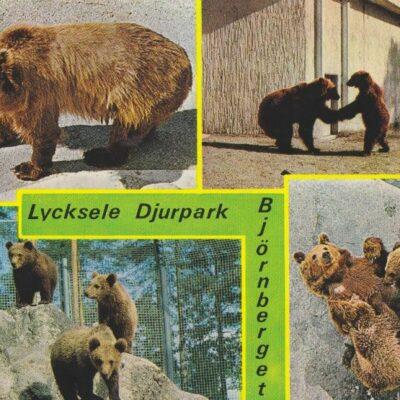 Björnberget. Lycksele djurpark. Copyright: Grönlunds Foto, Skansholm, Vilhelmina Poststämplat 5/8 1984 Ägare: Åke Runnman 10x15