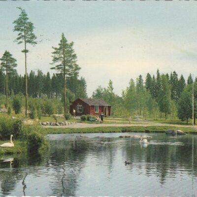 Umeå. Gamla svandammen Copyright: Sven Hörnell, Riksgränsen, Sweden Poststämplat 10/9 1964 Ägare: Ivar Söderlind 10x15