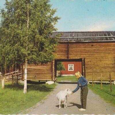 Umeå. Gamlia Copyright: Sven Hörnell, Riksgränsen, Sweden Poststämplat 1966-07-26 Ägare: Åke Runnman 10x15