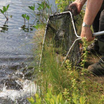 Bilder från fiskutsättning i Vargåhedtjärn