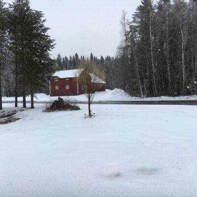 2016-04-25 I går tussilago - i dag snö = aprilväder Foto Åke Runnman