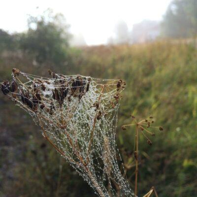 2014-08-06 Med hjälp av solsken, dimma och spindelnät kan man  hitta otroliga skapelser. Foto: Åke Runnman