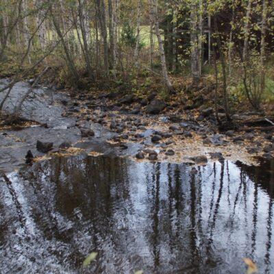 2014-09-29 Lövträden släpper sina löv och Kvarnbäcken drar med sig bladen ut i sjön. Foto: Åke Runnman