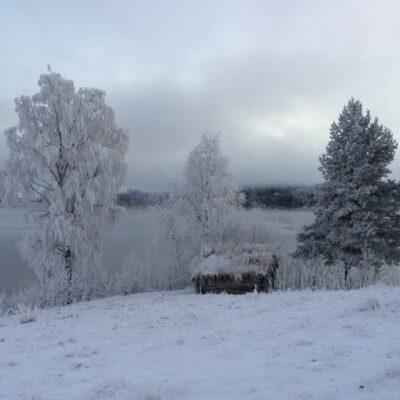 2015-11-23 Så har vintern kommit med snö och kyla.  Rimfrosten sätter sig i träden och gör naturen vit Foto: Åke Runnman