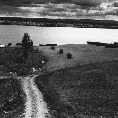 Juni 2017 Vi fortsätter sommaren med kreatursbilder. Här kommer en bild tagen av Sune Jonsson den 15 juli 1971. Verkar som att den är tagen över sjön mot västra, men kan någon precisera mer.