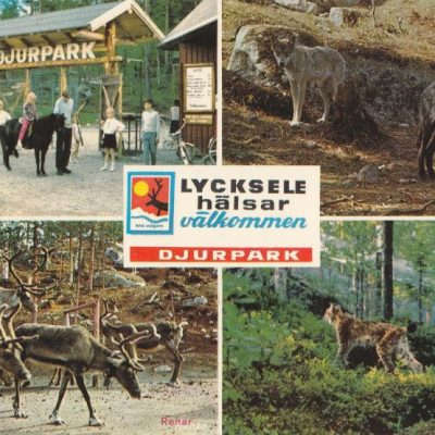 Lycksele djurpark Copyright: Grönlunds Foto, Skansholm Ocirkulerat Ägare: Åke Runnman 10x15