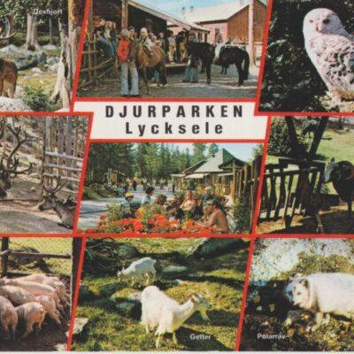 Lycksele Djurpark Copyright: Grönlunds Foto, Skansholm, Vilhelmina Ocirkulerat Ägare: Åke Runnman 10x15