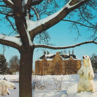Umeå. Västra Gymnasieskolan Förlag: Sandbergs Pappershandel, Umeå Poststämplat 1980-03-21 Ägare: Ivar Söderlind 10x15