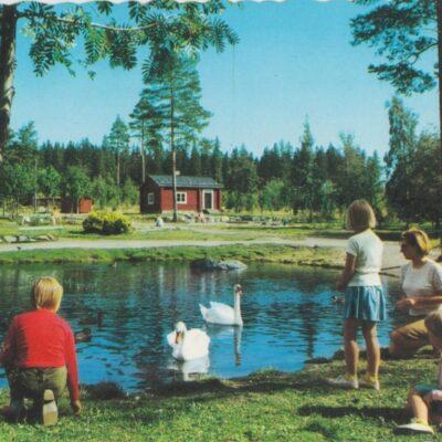 Gammlia. Umeå. Svandammen Copyright: GRAFISK KONST Poststämplat 1968-05-27 Ägare: Åke Runnman 10x15
