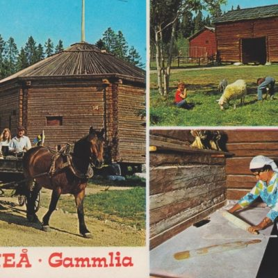 UMEÅ . Gammlia (tryckt Ångermanland och överstämplat med Västerbotten) Hallens reklamtryck Daterat 1986-08-12 Ägare: Åke Runnman 10x15