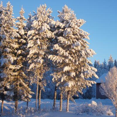 2015-01-16 Solen skiner igen och mörkrets negativa makter har åter fått dra sig tillbaka! Foto: Åke Runnman