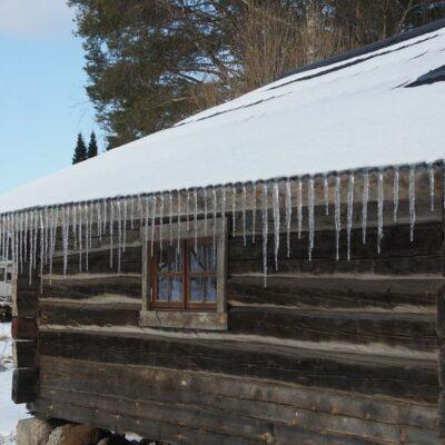 2014-03-19 Trots flera minusgrader kunde solen smälta snön och skapa en vacker istapps-gardin. Nere vid bron låg i dag, 19 mars, drygt 25 svanar, både vuxna och fjolårsungar. Vintern är på tillbakagång! Snart är det vårdagjämning. Foto: Åke Runnman