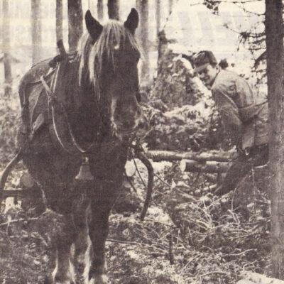 September 2009. Lennart Öredal och hans häst Etik Angående september månadsbild, vad nostalgiskt att se denna artikel (som jag själv klippt ut och sparat) på en av de sista trotjänarna i byn i hästväg! Etik, född -68 vill jag minnas, hade under åren en hel del olika hästtjejer som gärna mockade, ryktade och pysslade om honom och som med stor glädje ibland fick ta med honom ut på en rid- eller körtur runt byn. Det är många som grundlade sitt intresse där i det öppna stallet hos Öredahls och som också idag är aktiva inom hästbranschen. Självskriven körhäst under många år längst fram i festtågen på hembygdsdagarna och på ett och annat bröllop var Etik dragare. Mitt hästintresse startade nog vid nån potatisupptagning när jag var liten, eftersom han var den som drog pärsprätten däri Öhrmans pärland. Det var med sorg vi sa adjö till honom sommaren -88, men med glädje man tänker tillbaka på alla glada och härliga hästminnen jag, Ritha och många med oss fick dela med Öredahls Etik! Tack till Lennart, Gertrude och Janne för alla timmar vi fick tillbringa i ert stall! Linda Öhrman